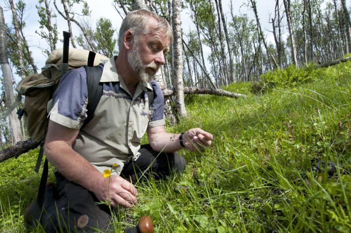 Per K. Bjørklund har kartlagd Nordnorsk natur i over 40 år. (Foto: Lars Sandved Dalen/Skog og landskap)