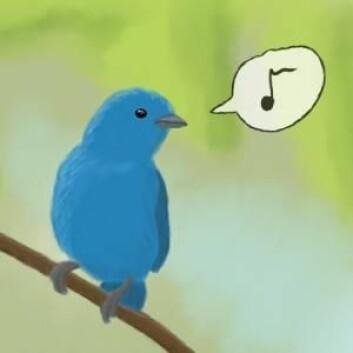 På et sosialt medium som Twitter spres budskapene raskt. Den største omtalen opptrer allerede etter 15–20 minutter og etter 24 timer dør det helt ut igjen. Det viser ny forskning fra Niels Bohr-instituttet. (Foto: (Illustrasjon: Faldrian))