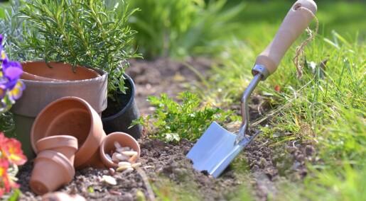 Dette bør du vite om jorden i hagen din