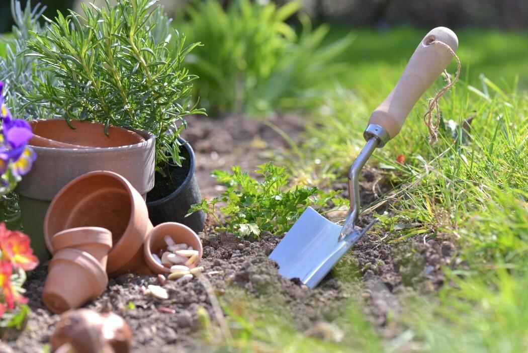 – Det er en klar sammenheng med hva som er i jorden og hva som vokser og trives i den. Skal du lykkes i hagen, kan det være lurt å tilpasse jorden til plantene du skal ha, forteller professor Tore Krogstad.