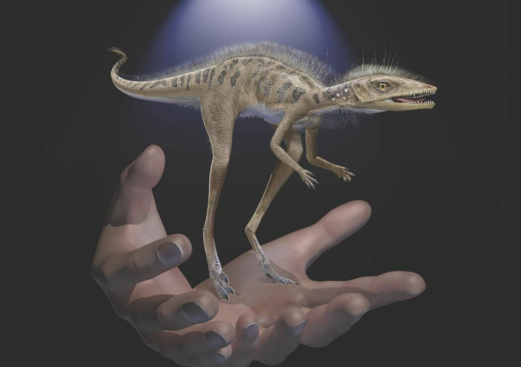 Kan slike små tasser ha vært forfedrene til Tyrannosaurus?