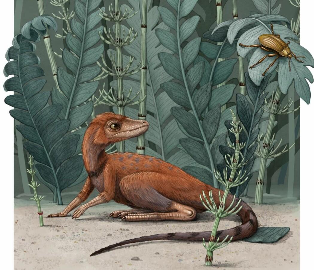 Forskerne tror Kongonaphon kely spiste insekter. Kanskje så den slik ut?