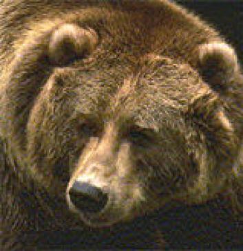 """""""Oddbjørn betyr spiss bjørn. Hvor mange spisse bjørner er det egentlig?"""""""