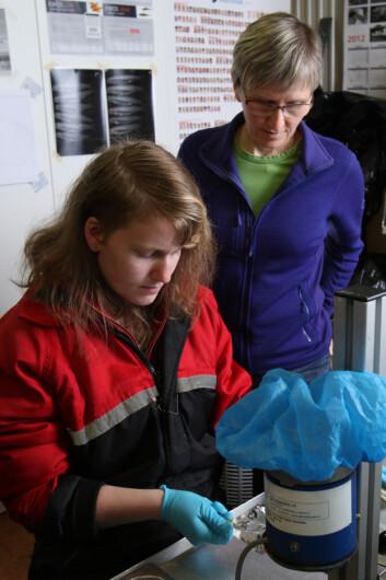 Gerd Marit Berge (bak) og tekniker merker laks som skal testes for evne til å omdanne korte omega-3-fettsyrer til lange omega-3-fettsyrer. (Foto: (Kjell Merok, Nofima))