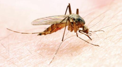 Malaria rammer hardere i kjøligere områder