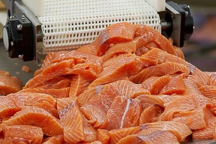 Laksen vi setter på middagsbordet bør ikke få for mye omega-6, mener doktorgradsstipendiat Lisa Kolden Midtbø. (Foto: Scanpix, Terje Bendiksby)