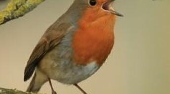 Fuglekvitter mot angst