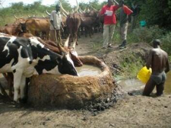 Vannhull i Uganda. (Foto: Clovis Kankya)