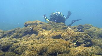Sjøgress tar livet av korallrev utenfor Hawaii