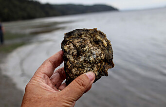 Sustainable tourism: Can your oyster safari make a difference for our planet?