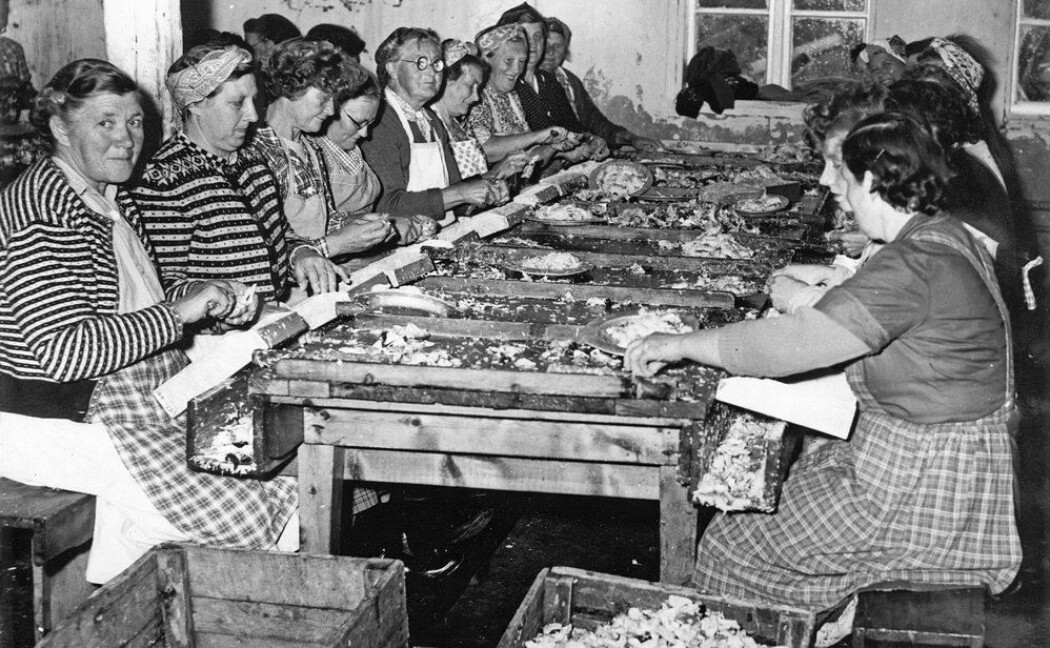 Hermetikkfabrikkene langs trøndelagskysten bidro til at mange kystkvinner fikk inntektsgivende arbeid. 70 prosent av arbeidsstokken var kvinner.