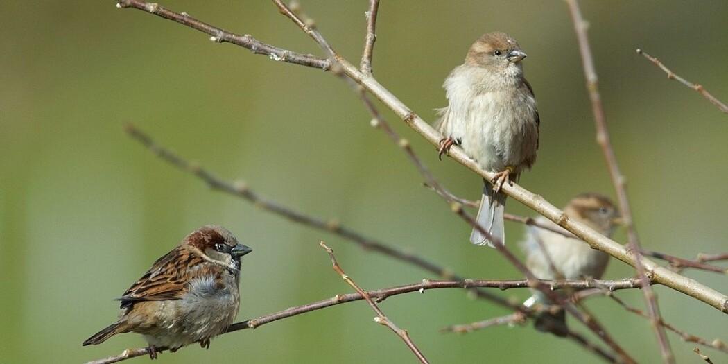 Ofte isoleres grupper av fugler og dyr fra andre artsfeller. Det kan gi mer innavl, som igjen skader muligheten for å overleve.