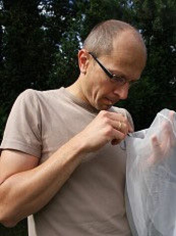 Torbjørn Ekrem undersøker insekter med pinsett som han har fanget i håven sin. (Foto: Stina Åshildsdatter Grolid)