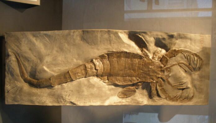 Denne flotte fossilen ble funnet i Norge i Ringerike.