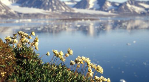 For å overleve i det tøffe klimaet på Svalbard har noen planter utviklet egne triks
