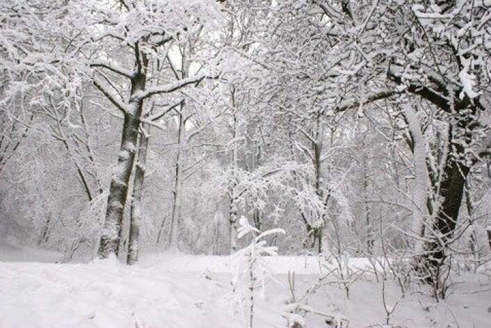 Lav solaktivitet ser i visse områder av verden ut til å være en motvekt til drivhuseffekten, slik at vintrene blir bitende kalde. (Foto: Colourbox)