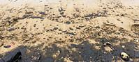 Skal finne ut hva som skjer med oljen etter utslipp i havet