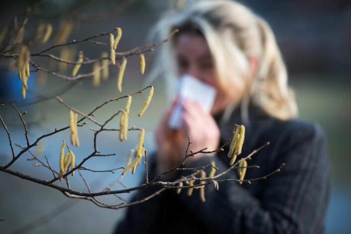 Nå er nok en sesong med pollenallergi snart i gang. Et nytt nesefilter kan lindre symptomene. (Foto: Fredrik Sandberg, TT Nyhetsbyrån)