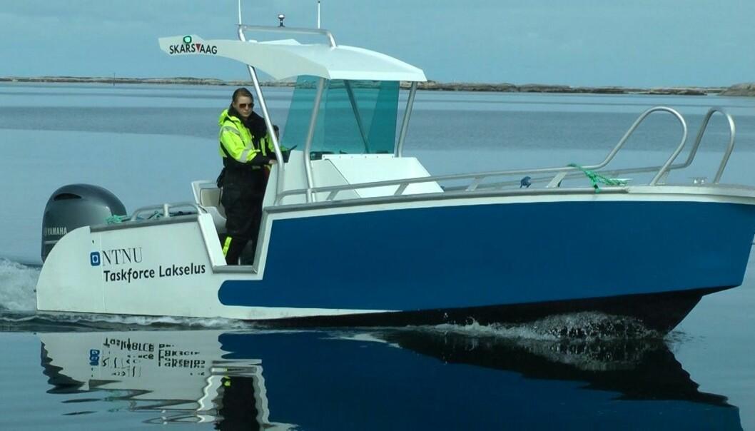 Lone Jevne har tatt en doktorgrad på tiltak som kan forsinke angrep av lakselus i oppdrettsanlegg. Her er hun i en båt fra Taskforce Lakselus ved NTNU og Blått kompetansesenter på Frøya i Trøndelag.