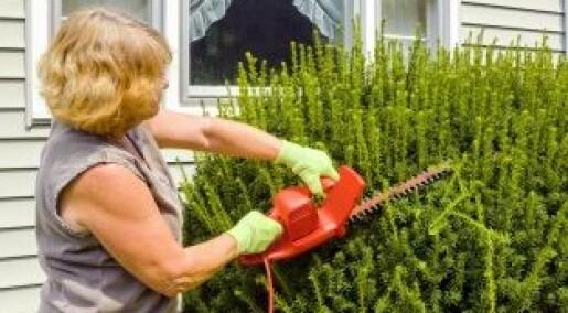 Hageavfall kan spre plantesykdommer