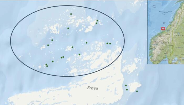 Lone Jevne ved NTNU fulgte luseangrep ved 16 lakseoppdrettsanlegg på Frøya i Trøndelag over seks år. Det varierte hvor utstrakt bruken av rensefisk var i de ulike anleggene, og dermed kunne hun sammenligne effekten.