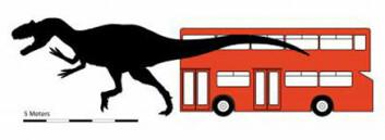 """""""Denne karen, Carcharodontosaurus iguidensis, tilhørte neppe de småspiste på sin tid... (Illustrasjon: Simon Powell)"""""""