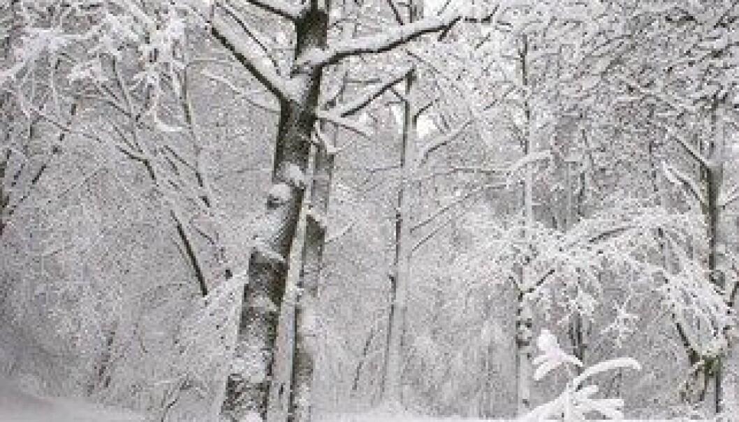 Lav solaktivitet ser i visse områder av verden ut til å være en motvekt til drivhuseffekten, slik at vintrene blir bitende kalde. Colourbox