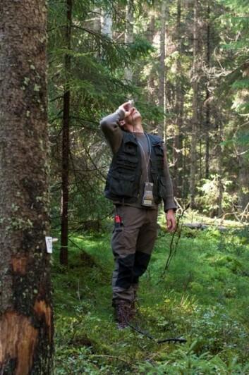 Feltleder Knut Ole Viken fra Skog og landskap måler høyden på et tre i forbindelse på en av Landsskogtakseringens flater. (Foto: Lars Sandved Dalen/Skog og landskap)