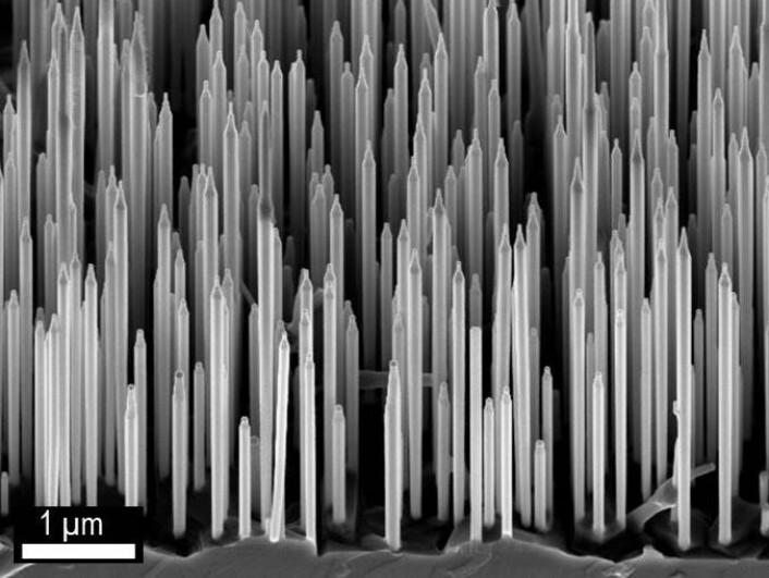 Elektronmikroskopi-bilde av wurtzite GaAs / AlGaAs nanotråder. (Foto: Dheeraj Dasa og Helge Weman, NTNU)