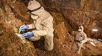 Mennesker kom til Amerika for minst 30 000 år siden, ifølge ny studie