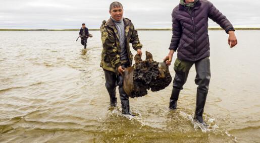 Godt bevart mammut-skjelett oppdaget i sibirsk innsjø