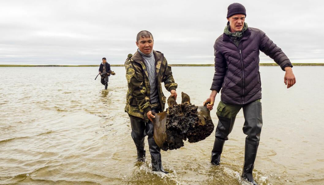 Et bilde offentliggjort av kontoret til guvernøren i Jamalo-Nenetsk viser det som skal være skjelettdeler fra en ullmammutt som hentes opp fra innsjøen i Sibir.