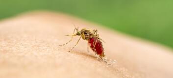 Myggen liker varme mennesker best