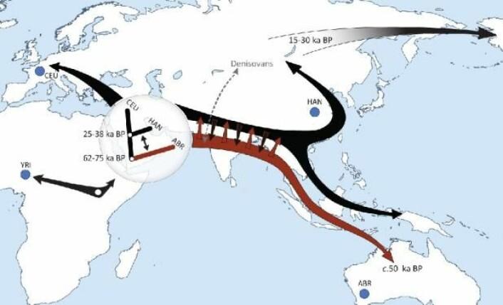 Den nye studien avslører at moderne mennesker har kolonisert kloden i to utvandringsbølger. Den første (røde), for om lag 70.000 år siden, nådde helt til Australia. Den andre (svarte) splittet opp i en europeisk og asiatisk del for 25–38.000 år siden og ble i Sørøst-Asia blandet med etterkommere av den første bølgen. Andre funn peker på at mennesketyper utenfor Afrika, som neandertalere og denisovaer, også er blitt blandet med bølgene av moderne mennesker. (Foto: (Grafikk: Science/AAAS))