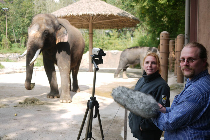 Angela Stoeger og Daniel Mietchen tar opp Koshiks prating i Everland Zoo i Sør-Korea. (Foto: Current Biology, Stoeger et al.)