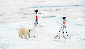 Bilde 3: Isbjørn kommer regelmessig på besøk når som Polarstern nærmer seg iskanten. Når dette skjer evakueres folk og utstyr fra isen for å sikre tryggleiken til både bjørn og menneske.