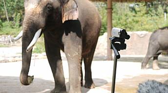 Se, elefanten snakker koreansk!