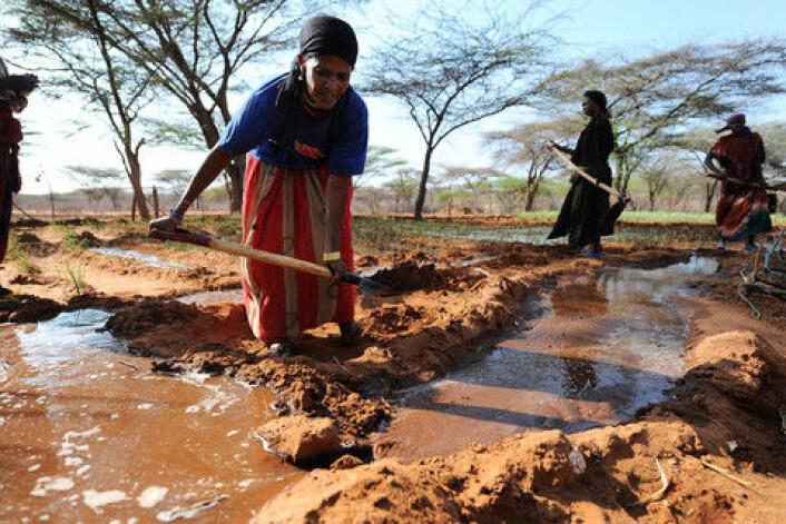 Jordbrukere i Kenya. (Illutrasjonsfoto: colourbox.no)