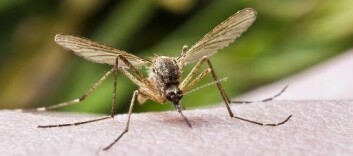 Insektmiddelet DEET, som blant annet finnes i mange myggsprayer, er ett av stoffene Skinner har forsket på. (Foto: Shutterstock)
