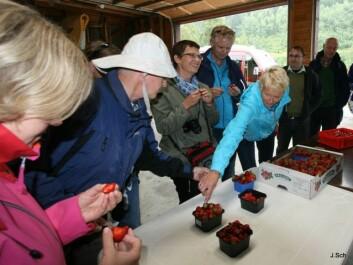 Smaking av årets jordbær under fagdag i Valldal. (Foto: Rune Vereide)