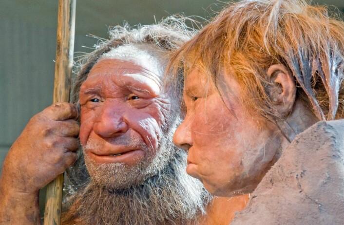 "Neandertalerne ""N"" og ""Wilma"" på Neanderthal Museum i Tyskland. ""M"" er basert på et 40 000 år gammelt fossil. ""Wilma"" er basert på et annet fossil som ligger i American museum of natural history in New York. (Foto: Martin Meissner, AP/Scanpix)"