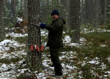 Avdelingsingeniør Robert Andersen, Skog og landskap, er ute på felt nr. 7 for å vurdere skadene som Dagmar gjorde i romjula og se hva som står igjen. (Foto: Stig Støtvig, Skog og landskap)