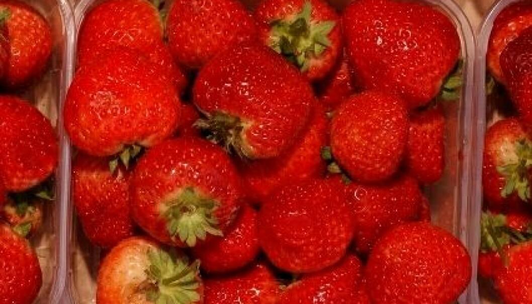 Jordbær i kurv. Ragnar Våga Pedersen