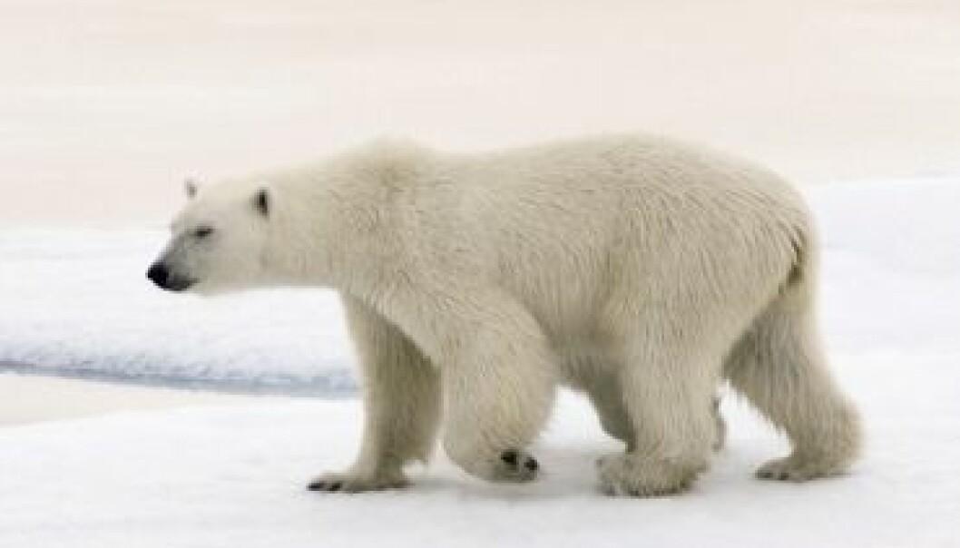 Janne Schreuder / Norsk Polarinstitutt