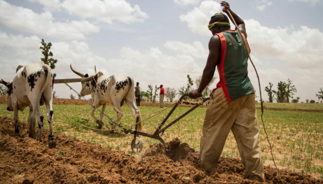 Hvor ble det av Afrikas grønne revolusjon?