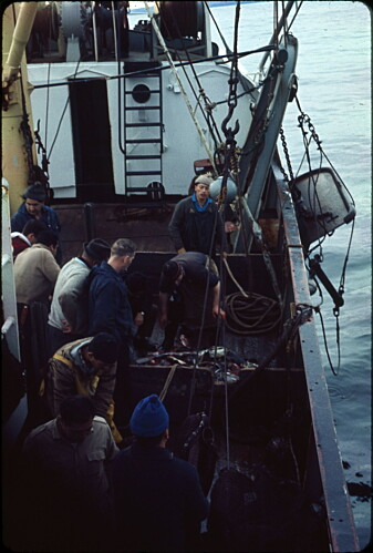 Linefiske og flere fartøy endret fiskeriet på 60-tallet.