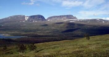 Skoggrensen i nordområdene forventes å trekke lenger nord i takt med varmere klima. (Foto: Sigrun Aune)