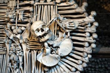 I katolisismen, hvor man har en tradisjon for benhus, såkalte ossuarier, er man gjerne mindre engstelige for å håndtere skjeletter og levninger, forklarer Sellevold. (Foto: Shutterstock)