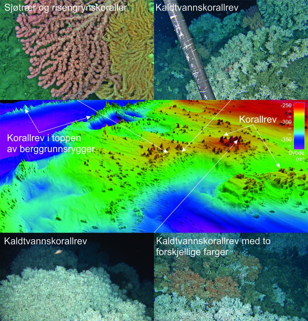 <b>Figur 2</b>. 3D bunnterrengdata viser området med hittil uregistrerte korallrev i Sklinnadjupet (bunnterrengdata innsamlet av Kartverket/MAREANO) samt foto fra videolinjer filmet under pågående MAREANO-tokt på sokkelen utenfor midt-Norge. Videofoto: MAREANO.