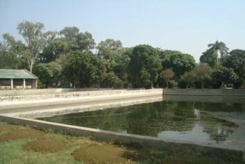 Karpedam i Pakistan. Haugene i forgrunnen er husdyrgjødsel som brukes som fôr. (Foto: Quaswar Ali Shah)